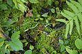 Wild mushroom 5096.jpg