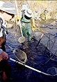 Wild trout project e walker river bridgeport0098 (26249865136).jpg