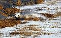 Wildlife on the Isle of May (1) - geograph.org.uk - 1345151.jpg