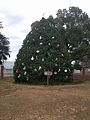 Winter Park Christmas Tree Number 3 (31206927560).jpg