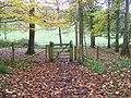Woodland park, Dinton Park - geograph.org.uk - 1579040.jpg