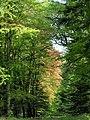 Woodland track - geograph.org.uk - 795012.jpg