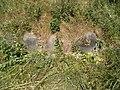 Woynillowicz family hill in Sawiczy - gravestone 2.jpg