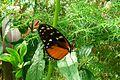 Wpz butterfly 01696.jpg