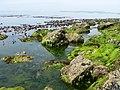 Xenerosa Mar - panoramio.jpg