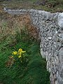 Yellow, Brick, Path. - geograph.org.uk - 1521212.jpg