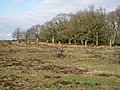Yew Tree Heath - geograph.org.uk - 335129.jpg