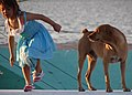 Young Girl with Dog - Along the Malecon - Campeche - Mexico.jpg