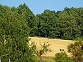 Zehista, 01796 Pirna, Germany - panoramio.jpg