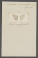 Zonosoma - Print - Iconographia Zoologica - Special Collections University of Amsterdam - UBAINV0274 058 01 0013.tif
