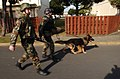 """They're on their way in!"" Master at Arms 1st Class Anthony Ortiz with his military working dog and Master at Arms 2nd Class Brian Parsons make their way to a building where a mock package was found 021114-N-HX866-003.jpg"