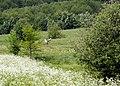 Żurawie na kwietnej łące - panoramio.jpg