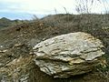 Ілірійський, каменистий степ.jpg