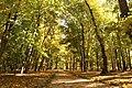 Алея парку Кочубеївського.jpg