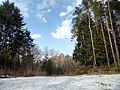 Апрельский снег - panoramio (3).jpg