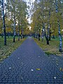 Березовая дорожка - panoramio.jpg