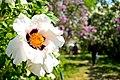 Весна в Ботанічному саду.jpg