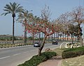 Весна в Нетании - panoramio.jpg