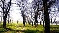 В лесопосадке - panoramio (2).jpg
