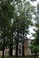 Група вікових дерев тополі білої IMG 6790.jpg