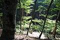 Демерджи, лесная долина, деревья на склонах, Крым.jpg