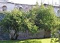 Дерева дерену Святослава Ярославича DSC 0410 stitch.jpg