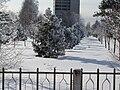 Кедровая роща зимой, Коряжма.JPG