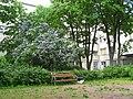 Кировский райсовет, сад во дворе.jpg