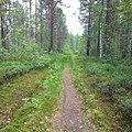 Лес в Котласском районе у д. Нырма.jpg