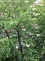Птенец вороны у гнезда.jpg