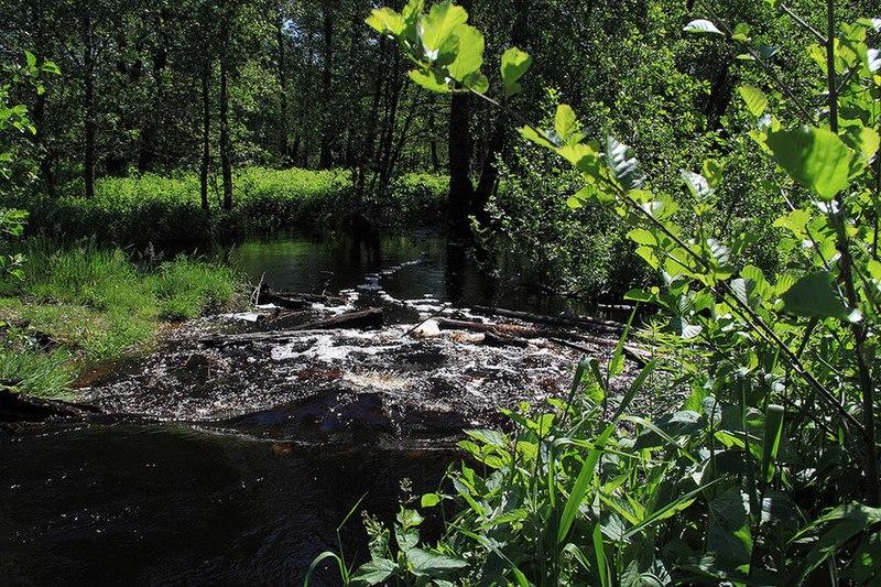 File:Река Липша (приток Большой Кокшаги) 05.jpg