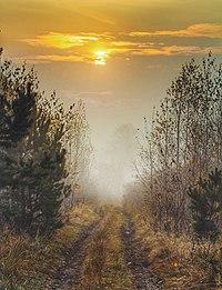 Сновидовицьке лісництво.jpg