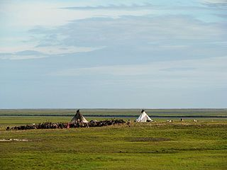 Reindeer herding practice of herding reindeer in a limited area