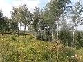 Терраса Исети в Ингальской долине (5).JPG