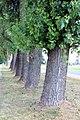 Хутка і гэтыя дрэвы, мабыць, спілуюць - panoramio.jpg