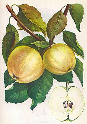 Кипельно-белый цвет википедия
