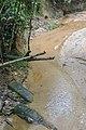 লাউয়াছড়া বনের ভিতরের খাল।.jpg
