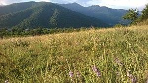 Lapanquri - Image: ლაფანყური2