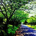 初夏の葛西臨海公園 - panoramio.jpg