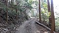 大比山 - panoramio (8).jpg