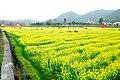 广州最美乡村—红山村 - panoramio (49).jpg