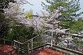 美加の台にて 2014.4.01 - panoramio.jpg