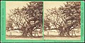 -Group of 11 Early Stereograph Views of British Landscapes- MET DP73097.jpg
