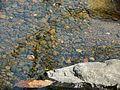 ... at Chinchoti waterfall (3187767913).jpg