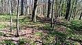 09 Grabhügelgruppe im Waldstück Hainbach.jpg