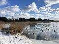 1026.DeHeld.Vinkhuizen.Westpark.Rietvelden.Waterskivijver.Natuur.Watervogels.Eenden.jpg