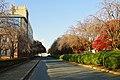 171103 Iwate University Morioka Iwate pref Japan08s3.jpg