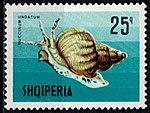 1968 Albania stamp Buccinum undatum.jpg