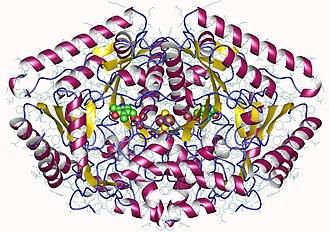 4-aminobutyrate transaminase - Image: 1ohv