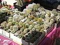 2010. Выставка цветов в Донецке на день города 127.jpg